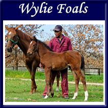 chevel-gallery-wylie_foals