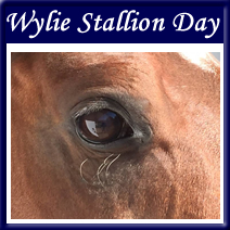 Chevel-Gallery-Wylie_Stallion_day