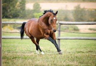 First crop sales success for Wylie Hall