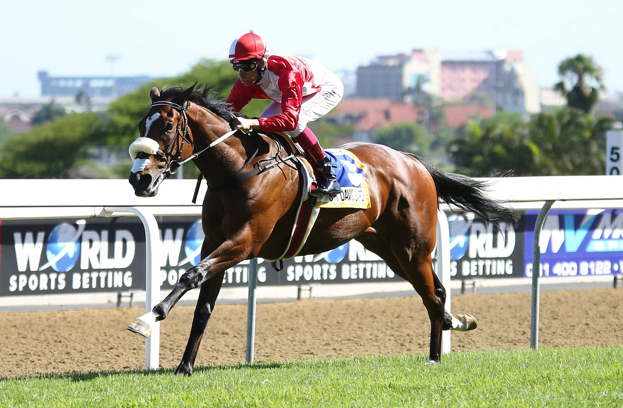 Champion Siblings Highlight Cheveley S Nys Draft Cheveley Stud Farm