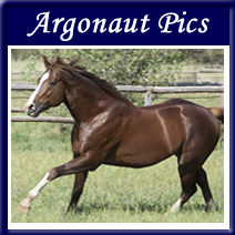 Chevel-Gallery-Argonaut