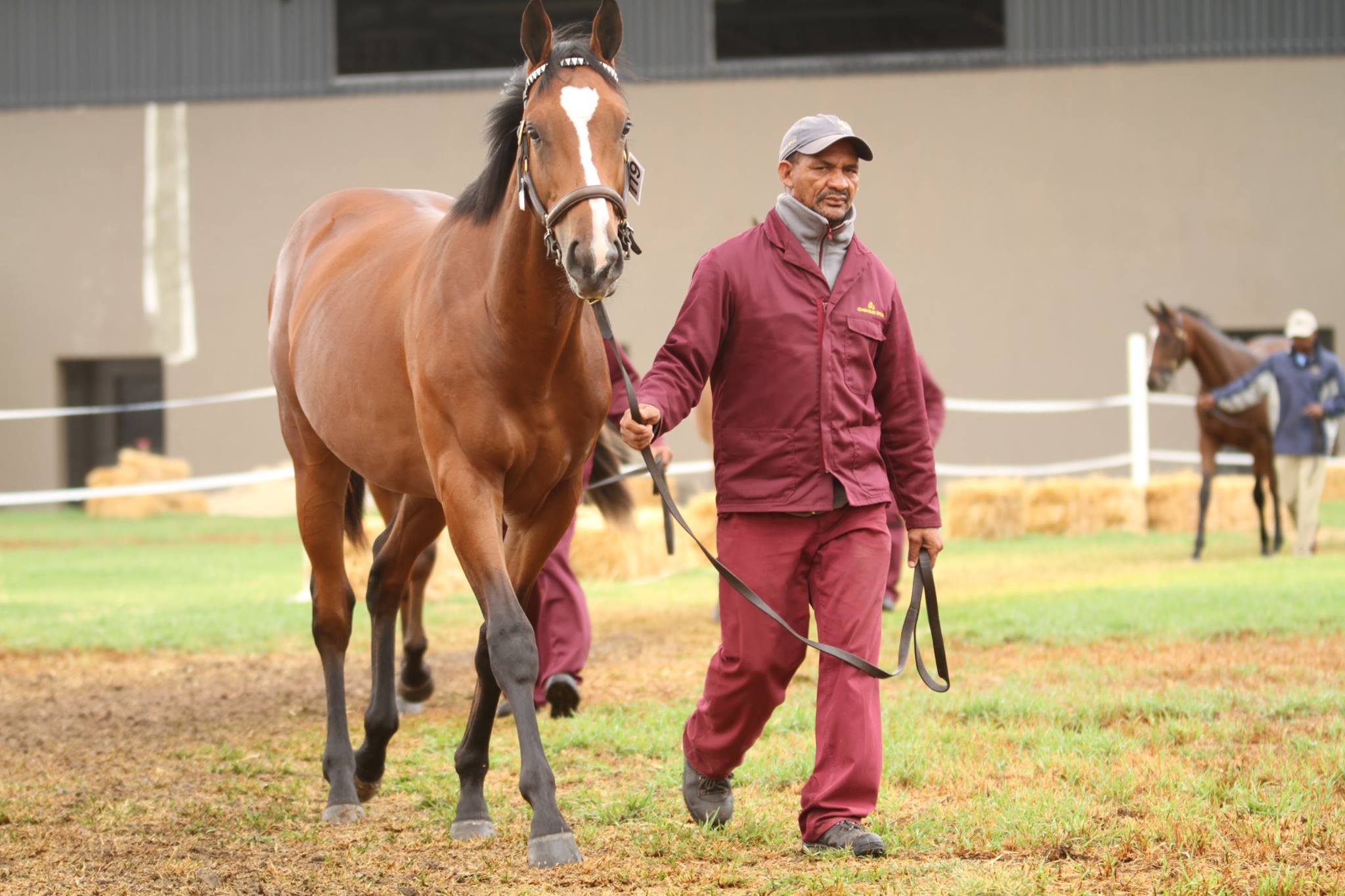 Representing at the '17 BSA Cape Yearling Sale, Mistico
