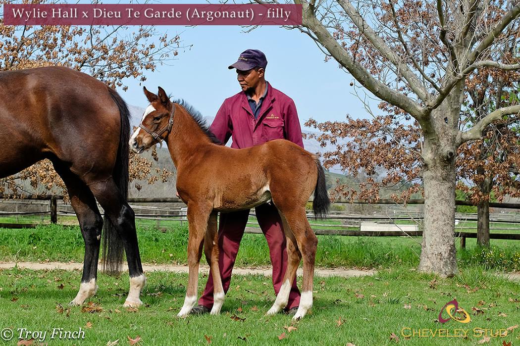 Wylie Hall X Dieu Te Garde (Argonaut)_Filly_1st foal_resize