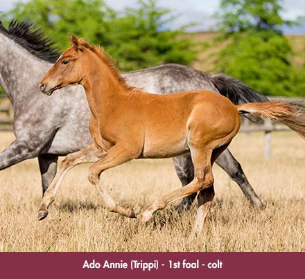 wylie_foal-ado_annie_chev