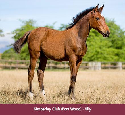 wylie_foal-kimberley_chev
