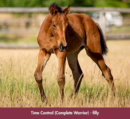 wylie_foal-timecontrol_chev