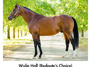 Sixth G1 win for Wylie Hall relative