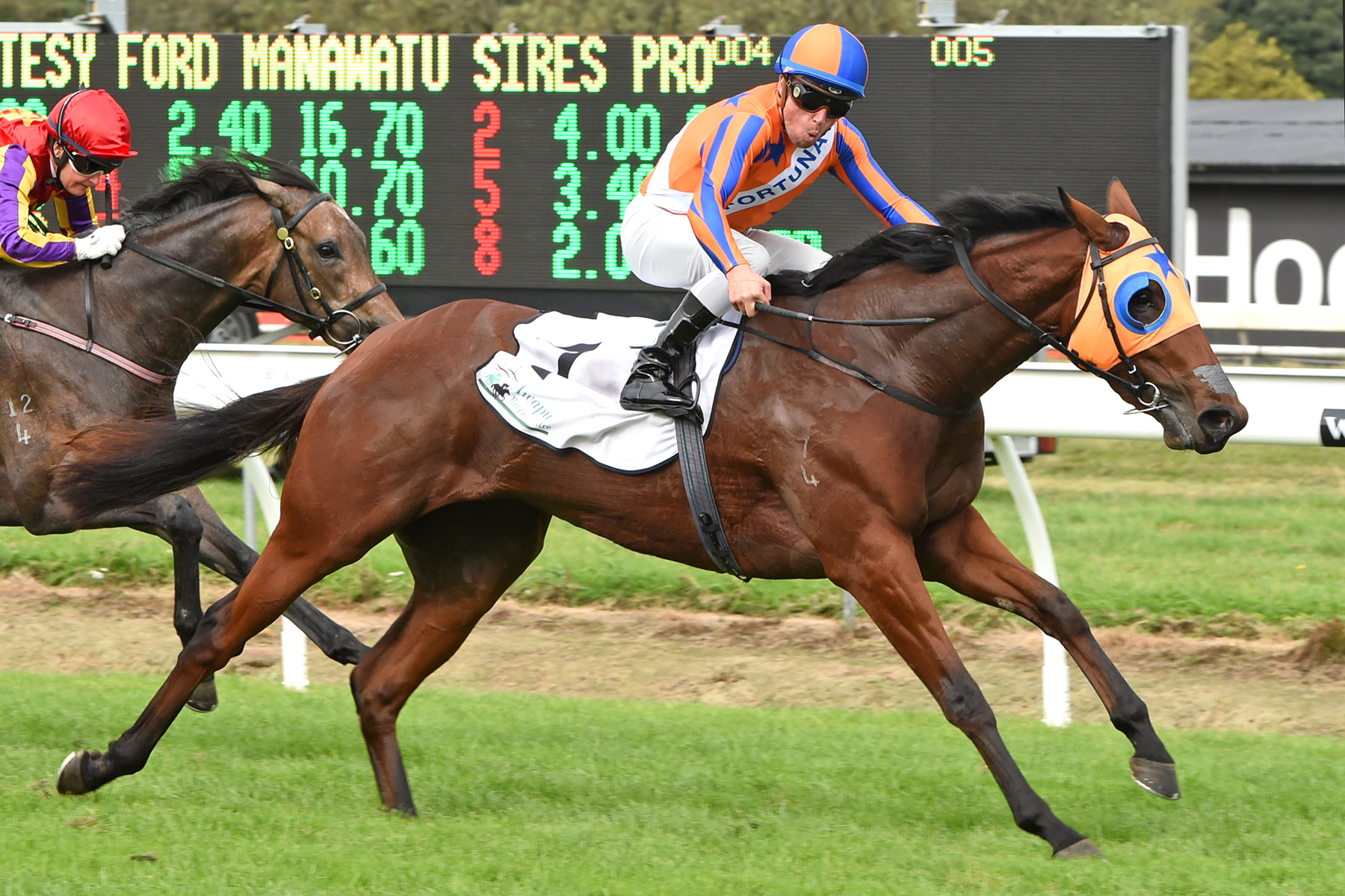 8th G1 win for Wylie Hall relative