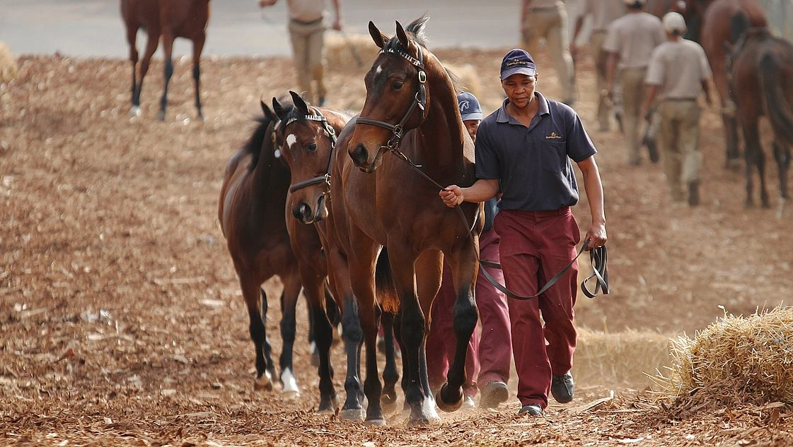 Cheveley Stud Offer Four Top Sorts at KZN Sale