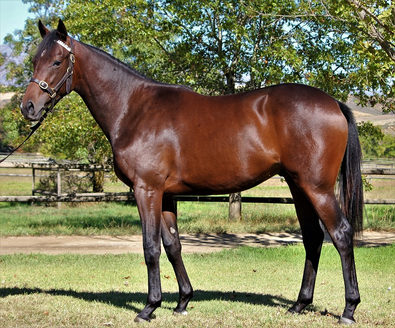 LOT 54 17Champers